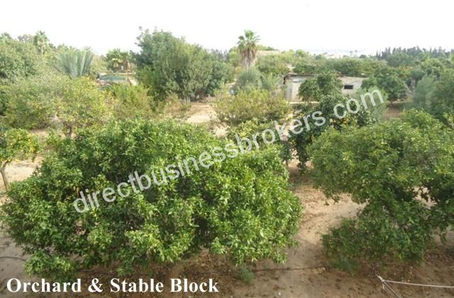 Villa-for-sale-in-Torrevieja-HBEH1073d